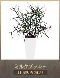 移転祝い観葉植物6,000円