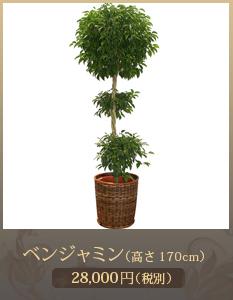 移転祝い観葉植物15,000円