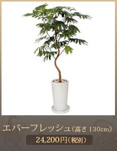 開店祝い(新装開店)観葉植物15,000円