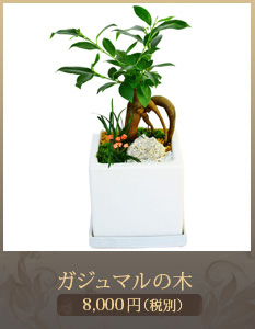 移転祝い観葉植物5,800円
