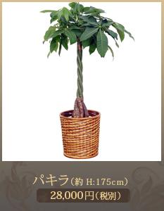 事務所開設祝いに観葉植物20,000円