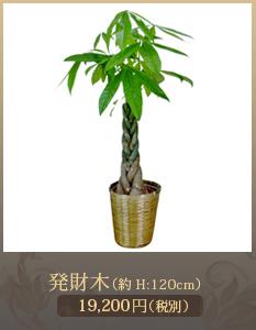 開院祝い観葉植物15,000円