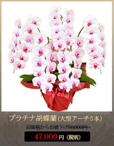 """開業祝いこちょうらん45,800円"""""""