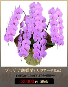 """開店祝い(新装開店)こちょうらん52,000円"""""""