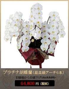 """事務所開設祝いこちょうらん66,000円"""""""