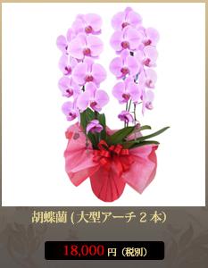 胡蝶蘭18,000円