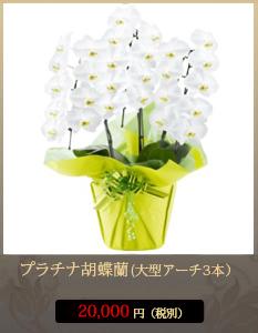 弔花(供花)こちょうらん20,000円