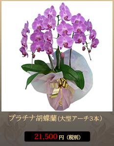 """事務所開設祝いこちょうらん19,800円"""""""