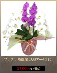 """開店祝い(新装開店)こちょうらん23,800円"""""""