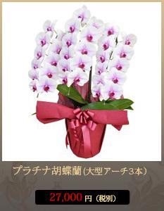 """事務所開設祝いこちょうらん23,800円"""""""