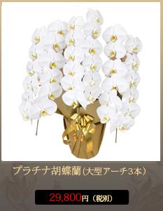 """事務所開設祝いこちょうらん29,800円"""""""