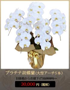 """事務所開設祝いこちょうらん32,000円"""""""