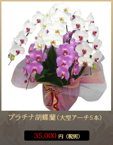 """事務所開設祝いこちょうらん35,000円"""""""