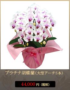 """開業祝いこちょうらん38,000円"""""""