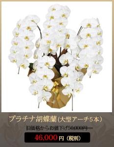 弔花(供花)こちょうらん50,000円