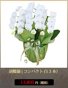 """胡蝶蘭13,800円"""""""