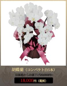 """胡蝶蘭18,000円"""""""