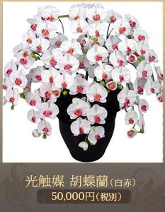 移転祝い胡蝶蘭34,000円