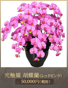 開店祝い胡蝶蘭34,000円
