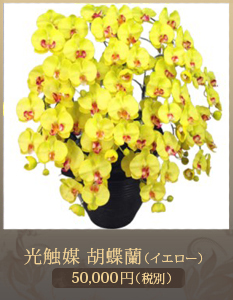 就任祝い胡蝶蘭34,000円