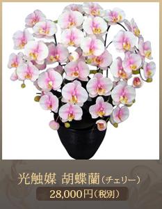 事務所開設祝い胡蝶蘭20,000円