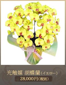 就任祝い胡蝶蘭20,000円
