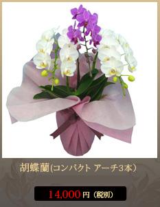 """胡蝶蘭12,000円"""""""