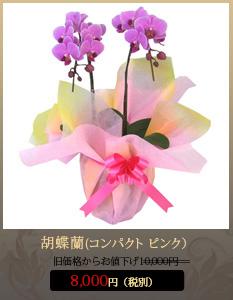 """開店祝い(新装開店)こちょうらん8,000円"""""""
