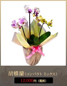 お彼岸(春・秋)こちょうらん12,000円