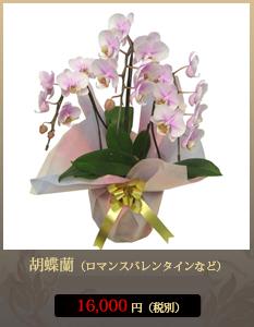 お彼岸(春・秋)こちょうらん13,000円