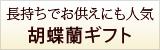三十三回忌の胡蝶蘭