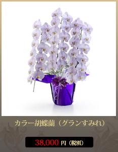 開業祝いカラー胡蝶蘭(グラン