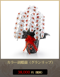 開店祝いカラー胡蝶蘭(グラン